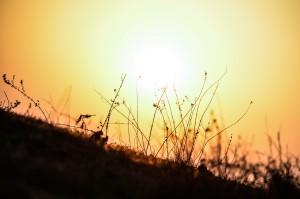 https://pixabay.com/it/estate-campo-all-aperto-sole-1283642/