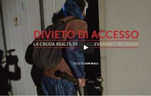 La realtà degli allevamenti intensivi in Italia