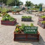 Cibo: Milano, un concorso per promuovere buone prassi, dagli orti urbani al micro catering