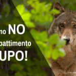 Lasciate stare il lupo: contro la proposta di abbattimento selettivo e riapertura caccia