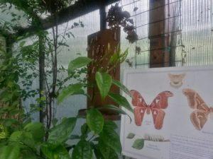 il giardino delle farfalle (10)