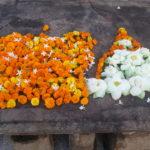 Sri Lanka, l'isola delle spezie e dei pavoni. Un viaggio soft tra templi, città coloniali, natura