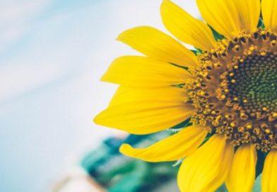 Come rendere felice ogni giornata? C'è un segreto