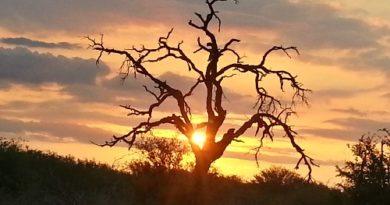 Sudafrica, attimi di meraviglia: al Kruger Park tra gli animali in libertà