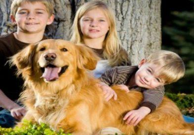 """Wonder mamme e la domanda fatidica: """"perché non ci compriamo il cane?"""""""