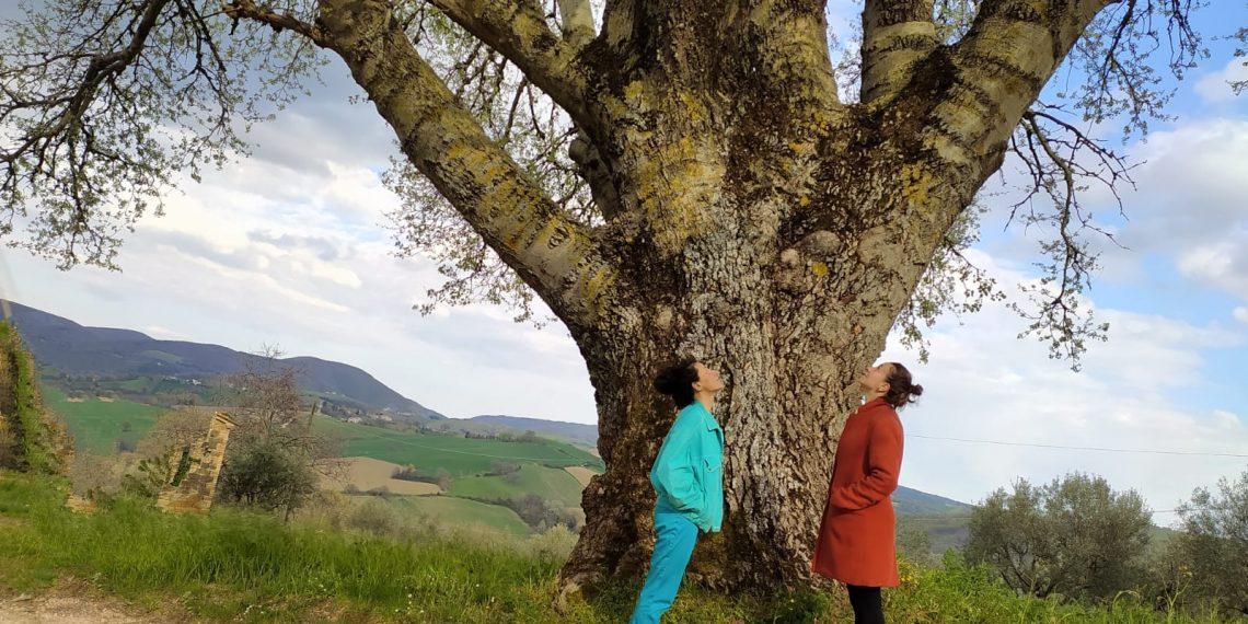 un albero mi ha chiesto di danzare cecilia ventriglia